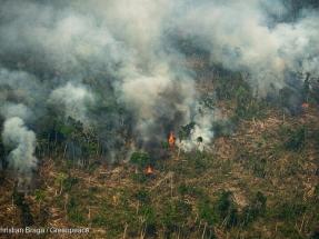 ONG denuncian recortes medioambientales en el presupuesto proyectado por el gobierno de Bolsonaro