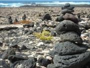 Fuerteventura subvenciona las instalaciones de autoconsumo conectadas a red en viviendas, empresas y granjas