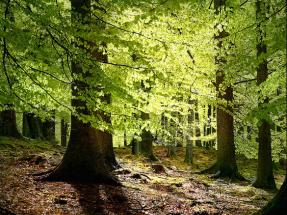 Poner freno a la deforestación y comer menos carne, medidas imprescindibles contra la crisis climática