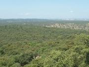 El Gobierno invertirá 458.000 euros en corregir tendidos eléctricos del monte de El Pardo