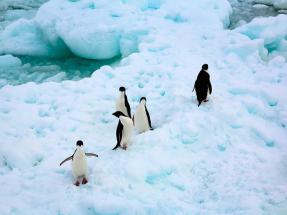 Crear el Santuario Antártico es clave para frenar el cambio climático