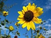 ¡Prepárate para el Día Solar Europeo!