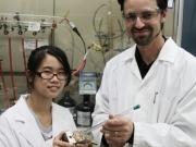 Crean una esponja solar que absorbe CO2